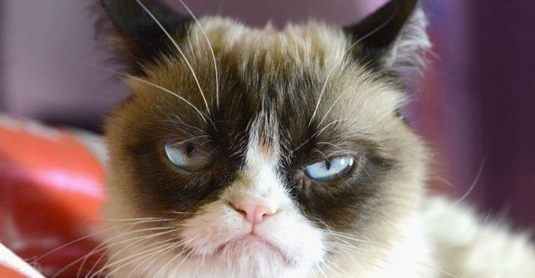 Pink Or Blue We Ll Tell You The Gender Of Your First Baby Cat Memes Grumpy Cat Meme Grumpy Cat