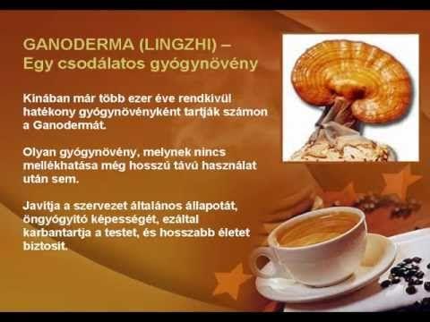 """A ganoderma varázslatos hatásai www.hzoltannetcaffe.dxn.hu  A ganoderma több mint ezer évig a misztériumok ködébe burkolózott. Az emberek csak annyit tudtak, hogy """"a ganoderma megőrzi a fiatalságot, és rendszeres fogyasztás esetén hosszú életet biztosít"""", de soha senki nem fogott tudományos kutatásba, hogy megállapítsa, miért is olyan hatékony. www.hzoltannetcaffe.dxn.hu"""