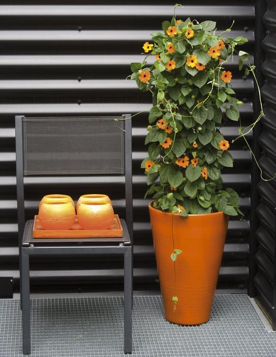 Galeria Zdjec Kwitnace Kwiaty Doniczkowe Idealne Do Dekoracji Balkonu I Tarasu Zdjecie Nr 9 Urzadzamy Pl Container Design Flowers Planter Pots