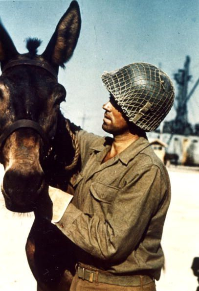 An American soldier attends to a mule while the animals were being loaded onto LST boats in preparation for the invasion of Italy, 1944.