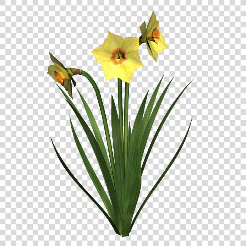 Pin On Spring Flowers