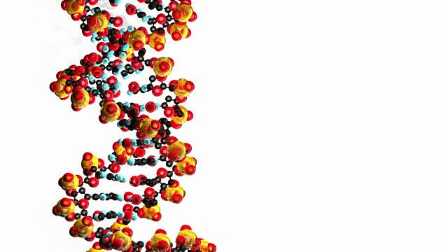 Computer Animation Of Dna White Background Stock Footage Video ...