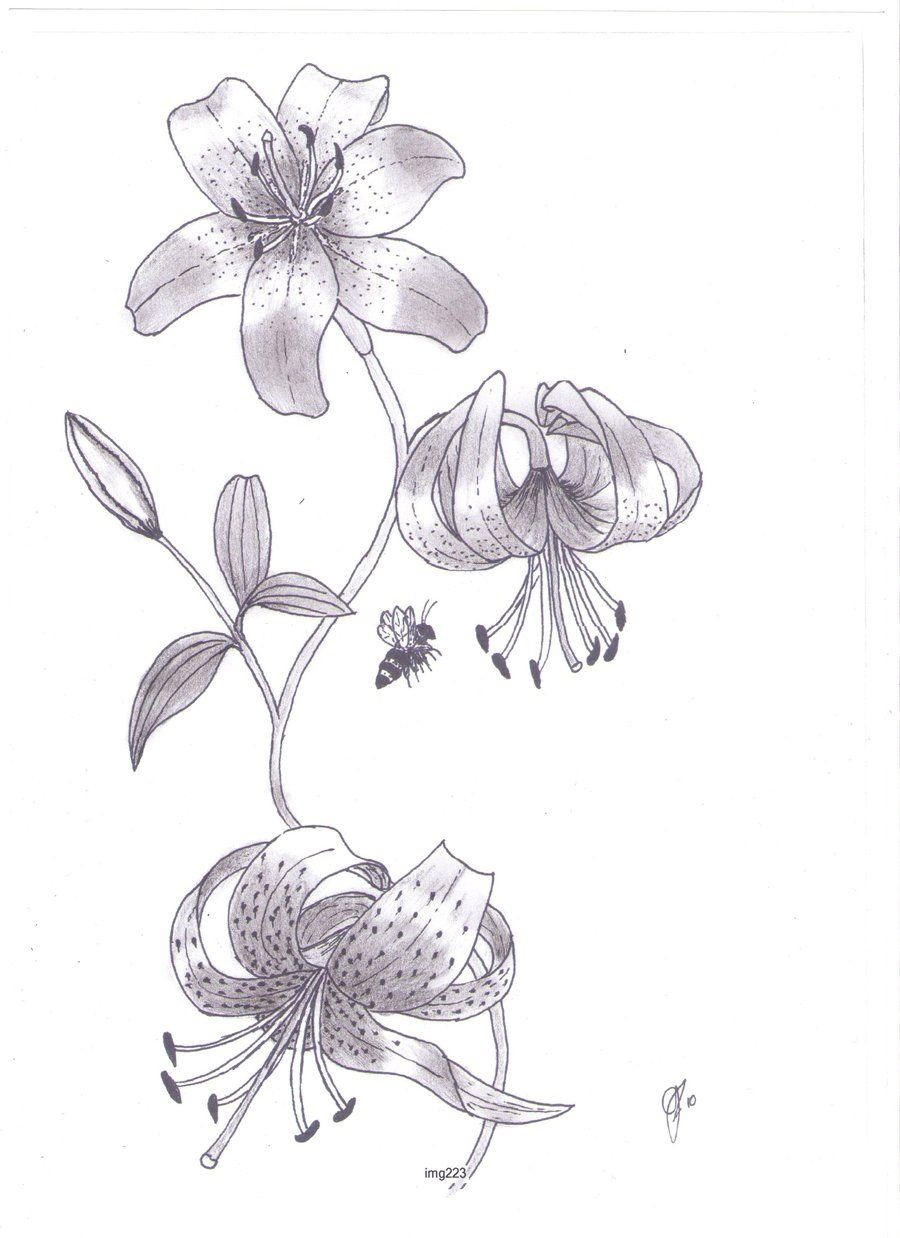 This is a photo of Shocking Tiger Lily Flower Drawing