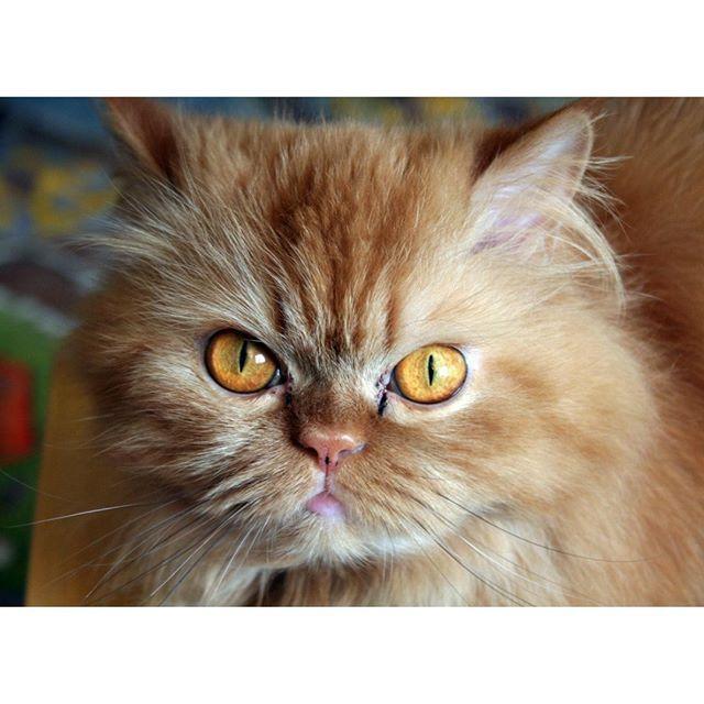 ️MonChatDoré?⠀ •⠀ •⠀ •⠀ •⠀ •⠀ #chat #cat #jaimemonchat #monchat #adorable #chatinstagram #passionchat #instacha ...