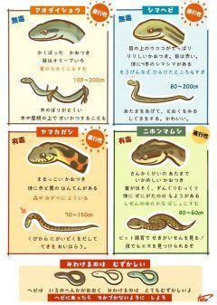レジャーシーズンに役立ちそうな蛇の見分け方を分かりやすく説明したイラストが話題になってますね 本州に住む蛇8種類のうち4種の特徴をかわいいイラストで説明されてますね アオダイショウは角ばった顔つきで目はオリーブ色シマヘビはりりしい顔つきで体に4本のシマシマ