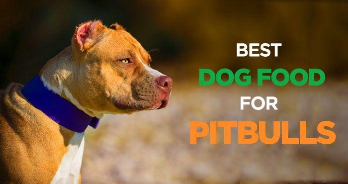 Best Dog Food For Pitbulls Muscular Body Needs High Protein Diet