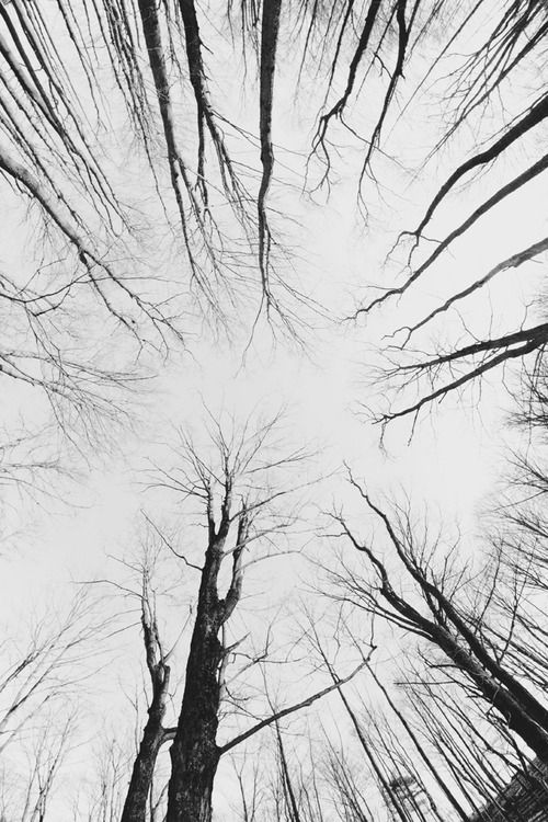 Perspective Of The Trees