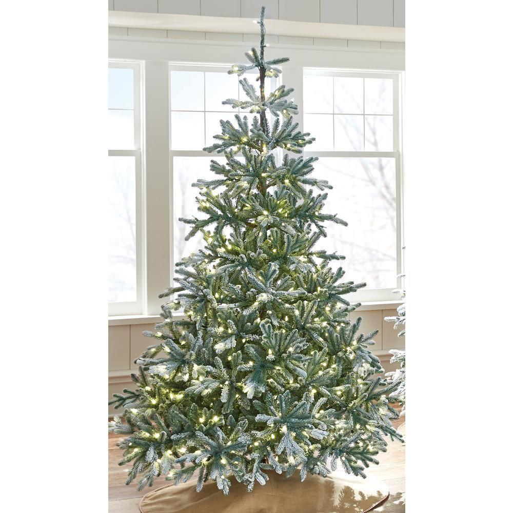 Martha Stewart Living 7 5 Ft Indoor Pre Lit Snowy Norwegian Spruce