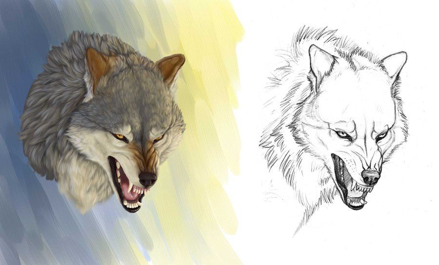 Angry Wolf By Https Www Deviantart Com Anisis On Deviantart