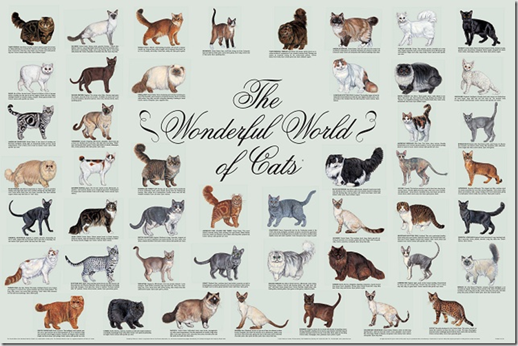 Friday Films Identifying Cat Breeds Cat Breeds Chart Types Of Cats Different Breeds Of Cats