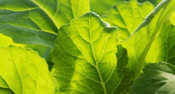 Grow Early Spring Veggies Early Spring Spring Plant Leaves 400 x 300