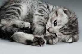 """Résultat de recherche d'images pour """"chatons"""""""