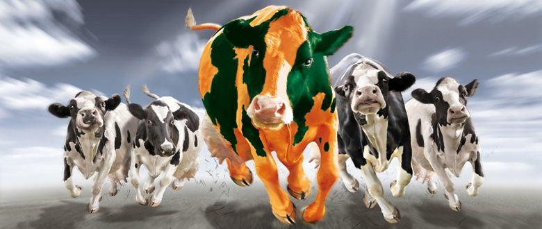 Trabajo web de Indiproweb para Agricola Gonzalez. Pueden visitarlo en www.agricolagonzalez.es