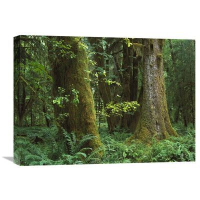 Global Gallery Nature Photographs Moss-Covered Trees and Dense Undergrowth in The Hoh Temperate Rainforest, Olympic National Park, Washington by Ti...
