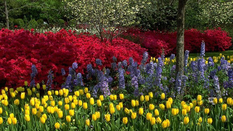 Margaret Elisabeth Jonsson Color Garden - Dallas Arboretum ...