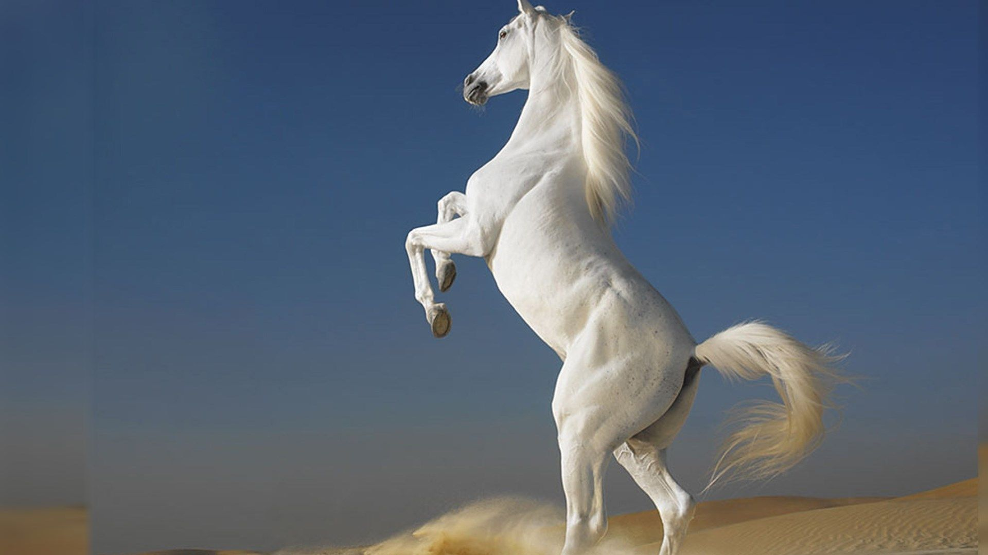 White Horse Best Hd Desktop Wallpapers Free Horse Wallpaper Wild Horse Pictures Beautiful Horse Pictures