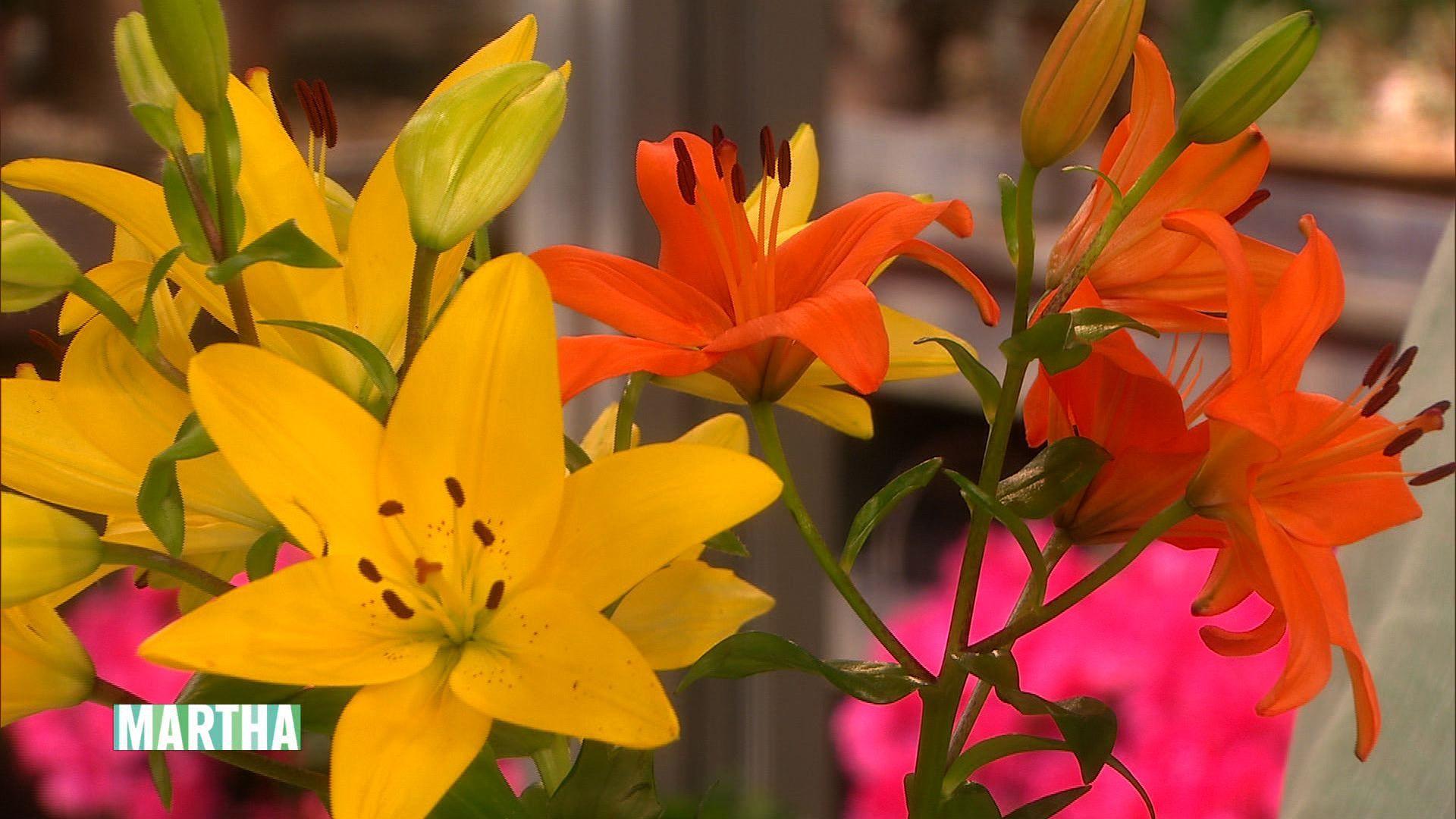 Seasonal Lilies Lily Bulbs Lily Day Lilies