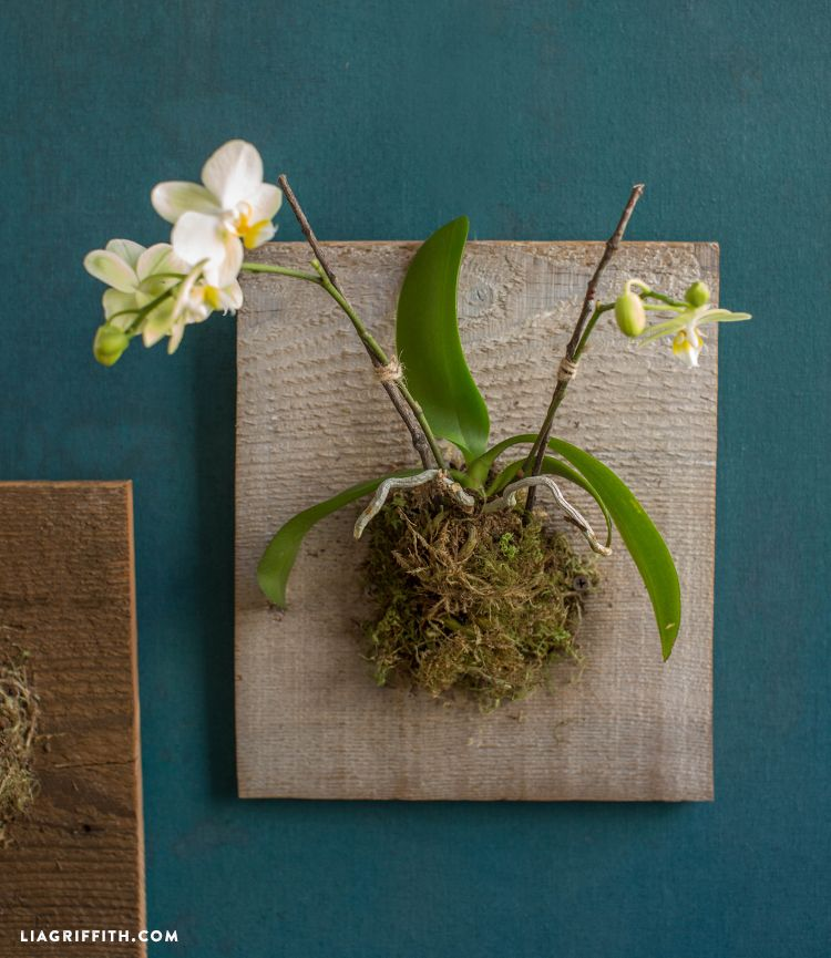Make pretty living wall art with our easy step-by-step tutorial for mounted orchids and succulents. Incorporate these into your home decor or give as gifts!