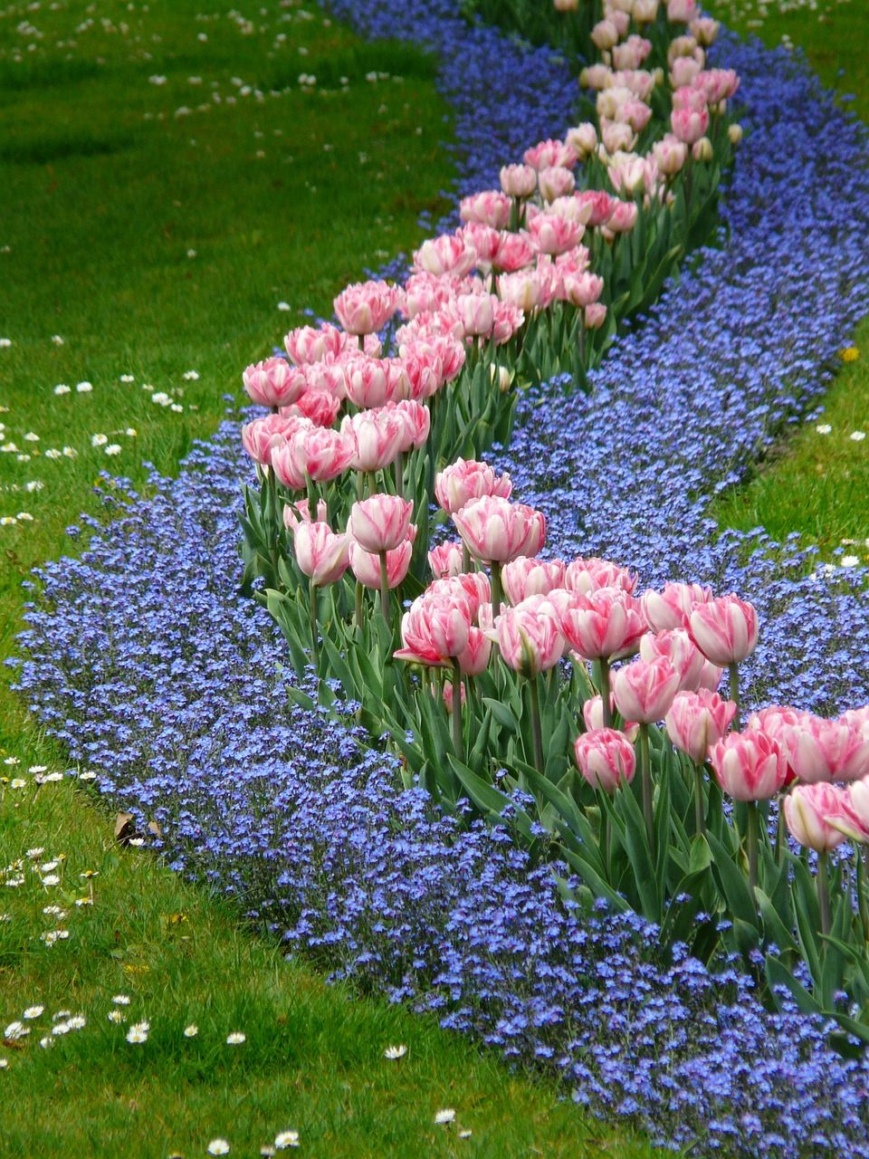Free Image On Pixabay Tulips Bed Pink Forget Me Not Tulips Garden Beautiful Gardens Tulips
