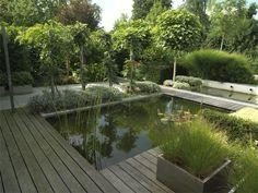 Bassin japonisant koi pond vijver tuin and