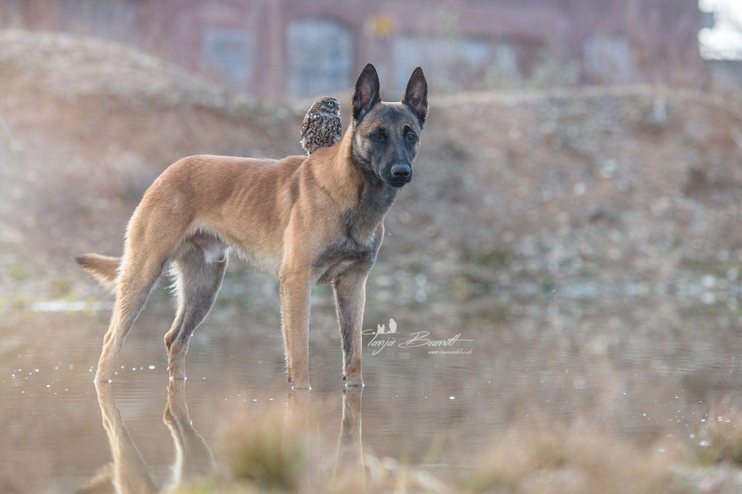 Romeo und Juliet, Bonny und Clyde und Brangelina können einpacken: Das neue Traumpaar heißt 'Ingo und Poldi' - ein Hund und eine Eule.