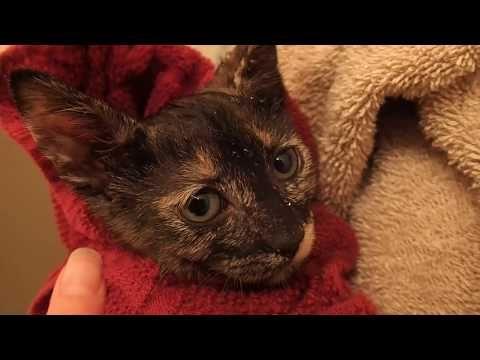 Kitten Sleeping Inside A T Shirt Pocket Cute Animals Kittens