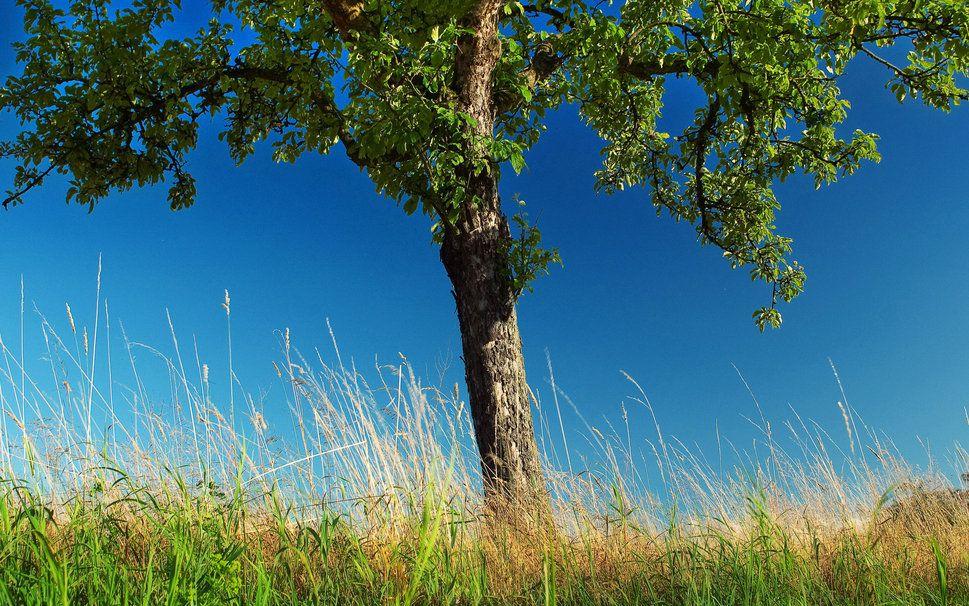 Naturaleza, Foto, árboles, pasto LA BELLEZA DE LOS ARBOLES