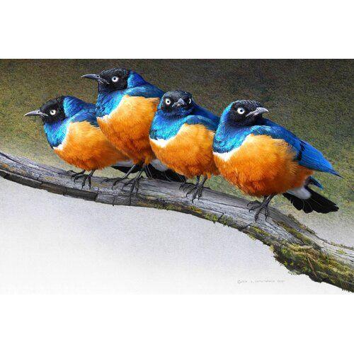 Leinwandbild Grumpy Starlings von Chris Vest East Urban Home Größe 51 cm H x 76 cm B