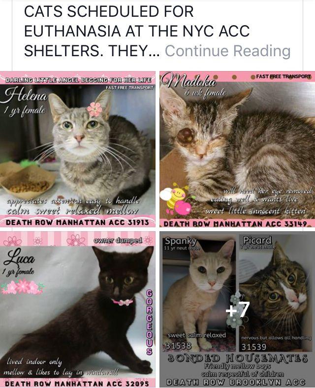 CATS TO DIE 07/07/18 | Catitude | Staten island new york