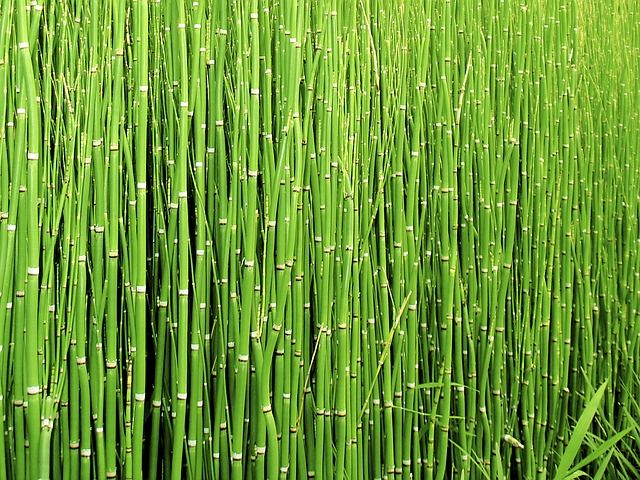 Free Image On Pixabay Scouring Rush Horsetail Plant Cola De Caballo Planta Cola De Caballo Trucos De Belleza