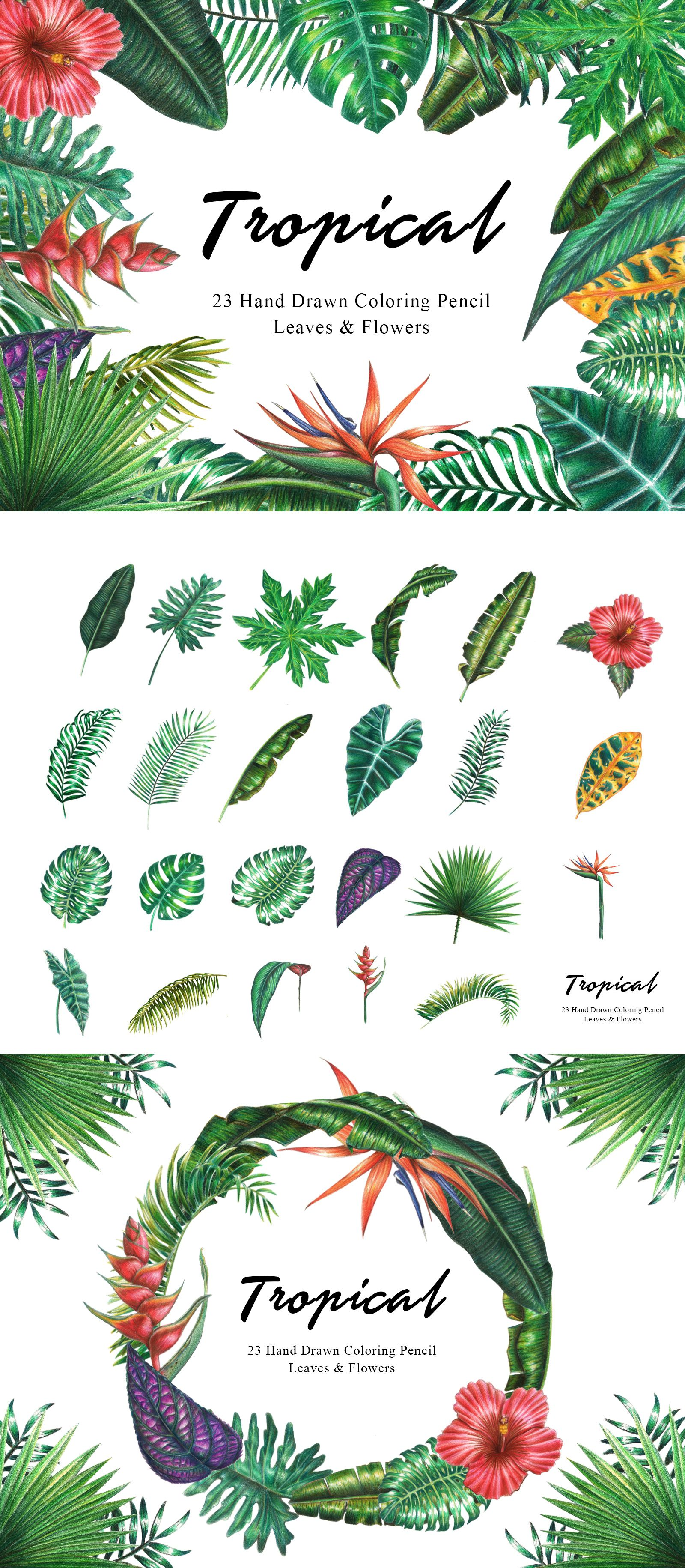 Tropical Clipart Tropical Watercolor X Colored Pencil Leaves Green Foliage Monstera Jungle Plants Wedding Invita Watercolor Plants Flower Aesthetic Plants Learn how to draw tropical leaf pictures using these outlines or print just for coloring. pinterest
