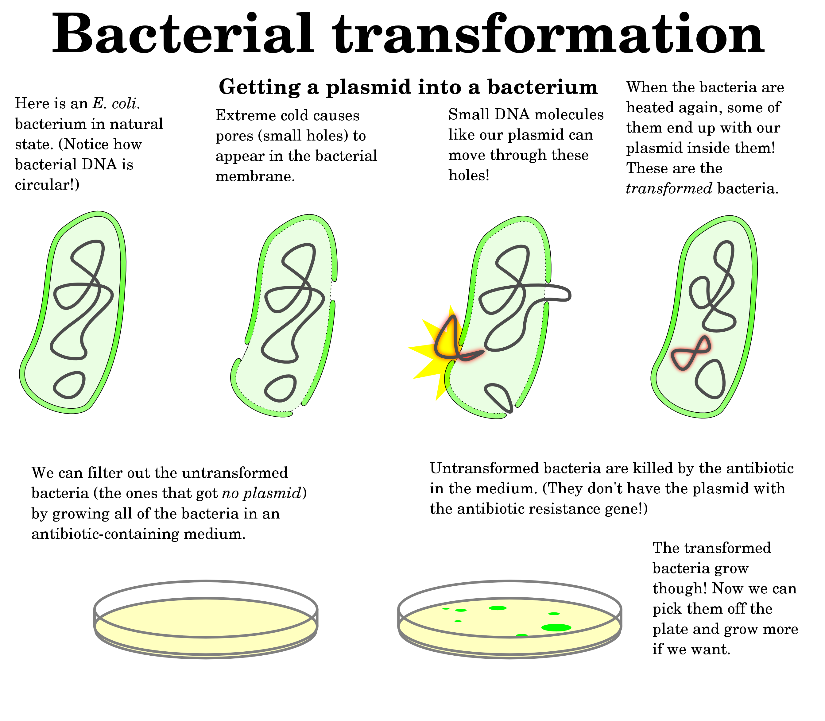 Mapping The Microbiome