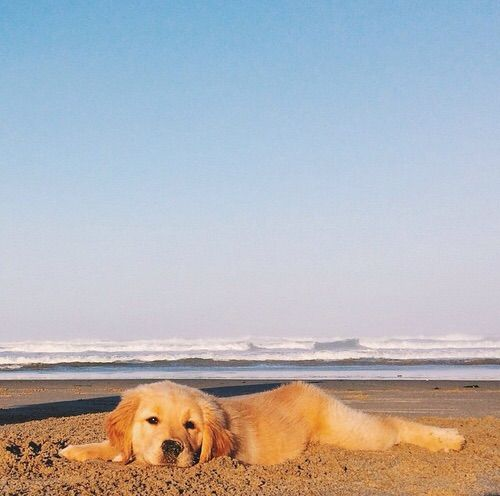 Two Of My Favorite Things The Beach And A Golden Retriever Puppy