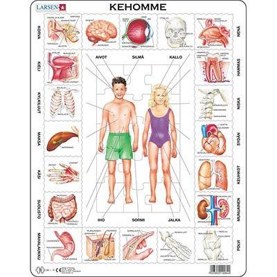 Kehomme (OB1) (7023852100844) | Class... / luokkaan ja oppitunneille | Pinterest | Human body ...