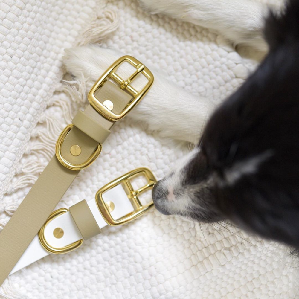 58 Wedding Dog Leash for Smaller Dogs 58 White Vegan Leather Biothane Leash