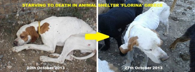 STARVING TO DEATH ANIMAL SHELTER FLORINA