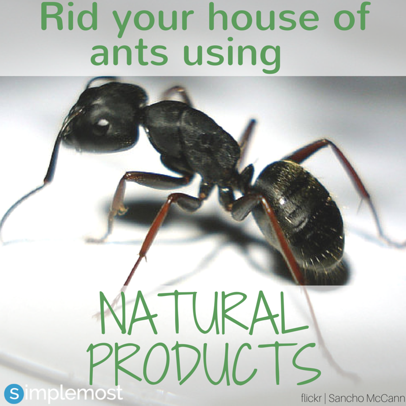 How To Quickly Get Rid Of Ants In Your Home With Natural