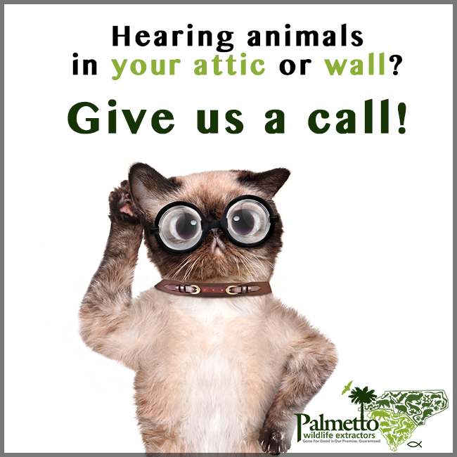 Hearing Animals In Your Attic Or Walls Call Us And We Will Be Happy To Come And Check It Out And Get Rid Of Those Unwanted Cri Wildlife Extractions Wildlife