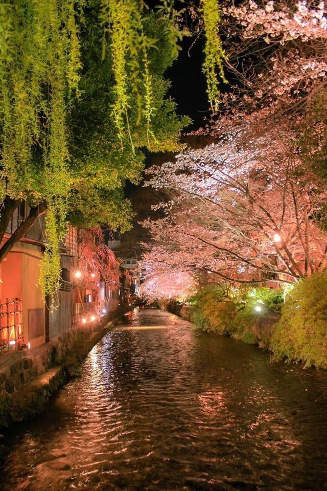 #Kyoto #Hanami