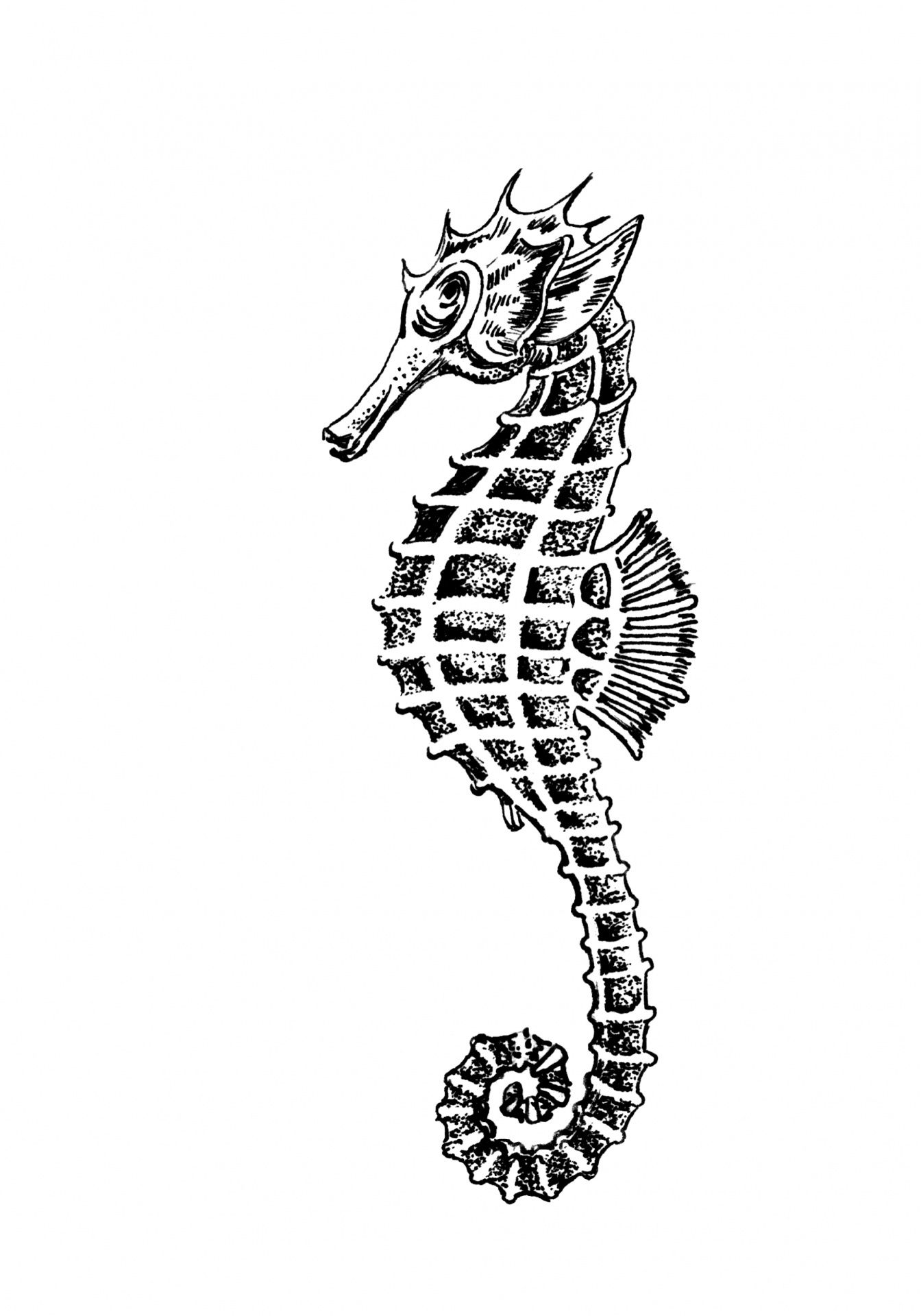 Seahorse Clipart Illustration Free Stock Photo Public