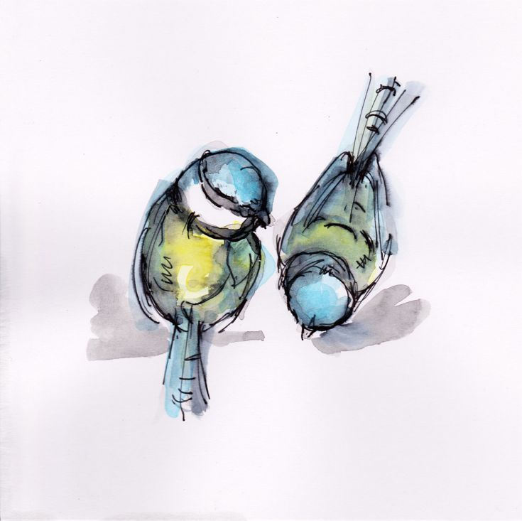 ARTFINDER: Two blue tits by Becca Alaway - Two blue tits...  A collection of bird paintings using a loose ink and watercolour wash technique. Signed on the back. Each piece is on 200gsm high quality...