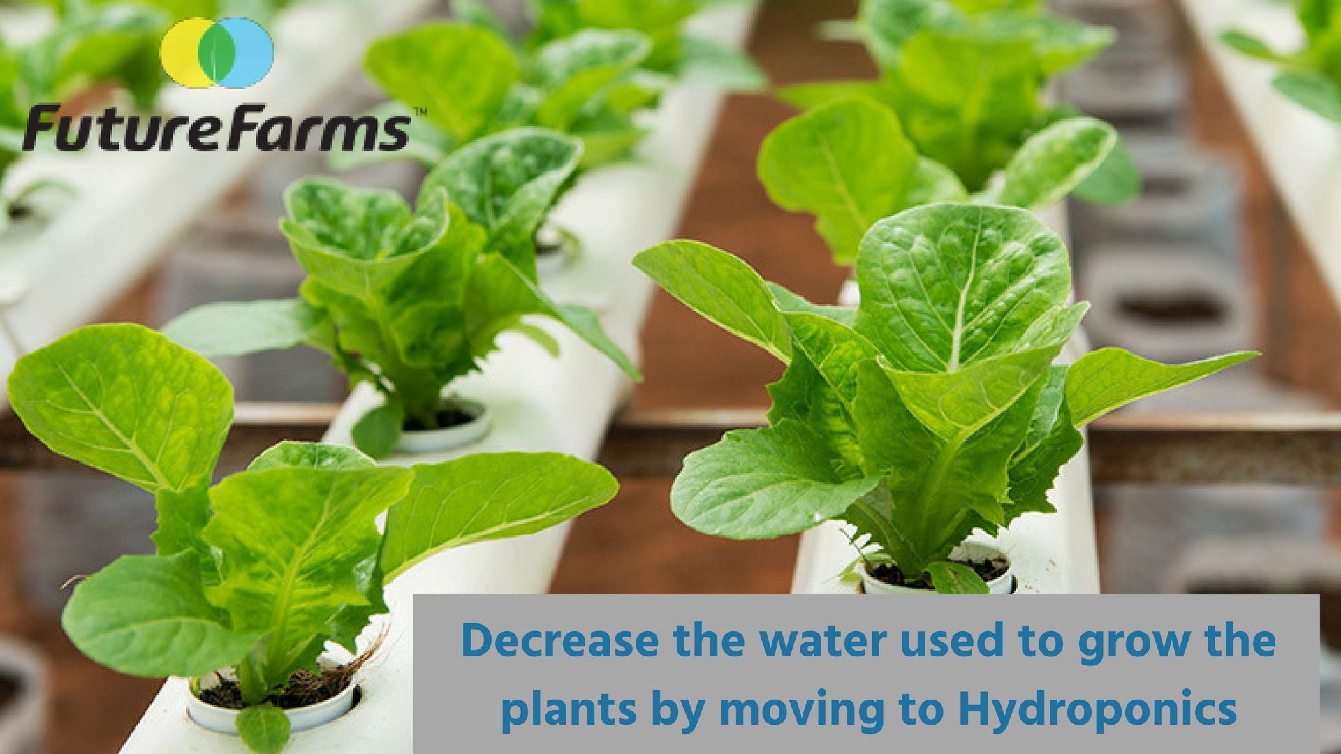 Hydroponics Farming & Hydroponics Kit in Chennai Home