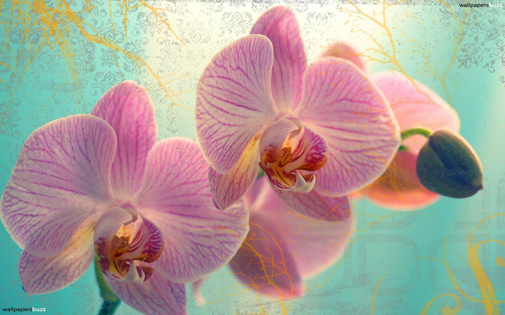 Best flowers android wallpapers hd images on pinterest r
