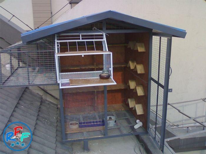 Pigeon Loft Design Ideas And Pigeon Loft Plan Artogul Pinterest