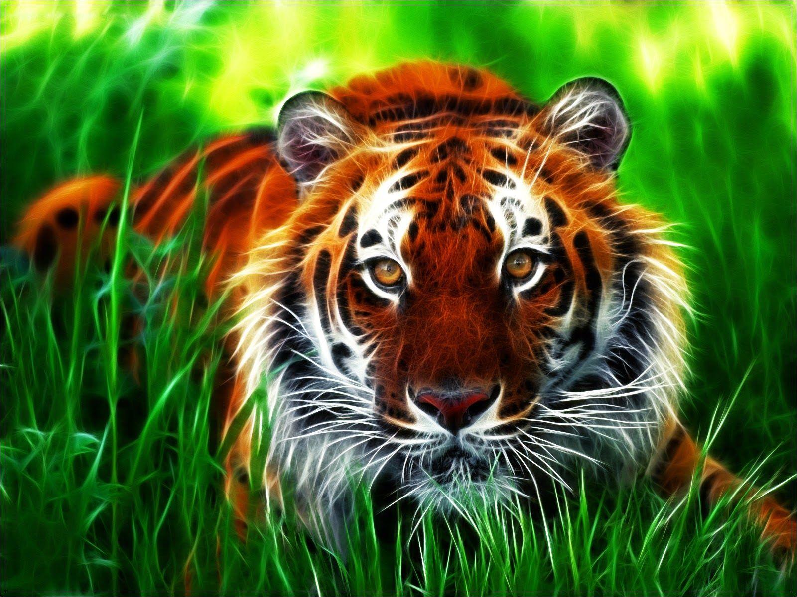 Hd Wallpapers 1080p Hd Wallpapers Fraktal Gambar Kucing Besar