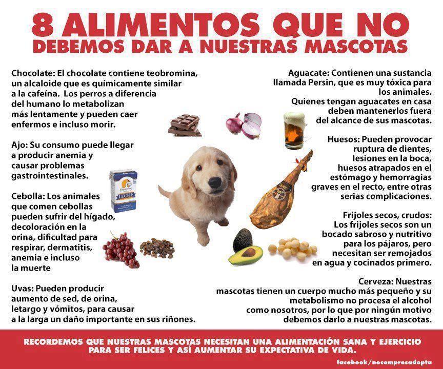 Pin De Lidia Aguilar Gómez En Frases Pensamientos Reflexiones Consejos Alimentos Prohibidos Para Perros Mascotas Informacion De Animales