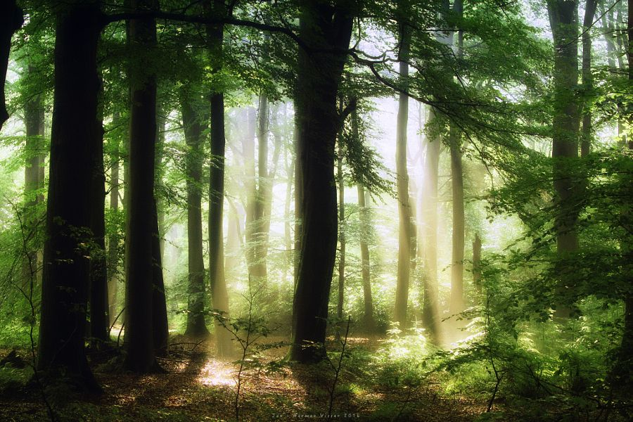 Sunbeams in woods (Lochem, Netherlands) by Jan - Herman Visser