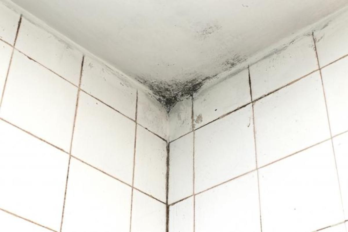 Tips For Painting Moldy Bathroom Walls And Ceilings In 2021 Bathroom Ceiling Cleaning Mold Mold In Bathroom
