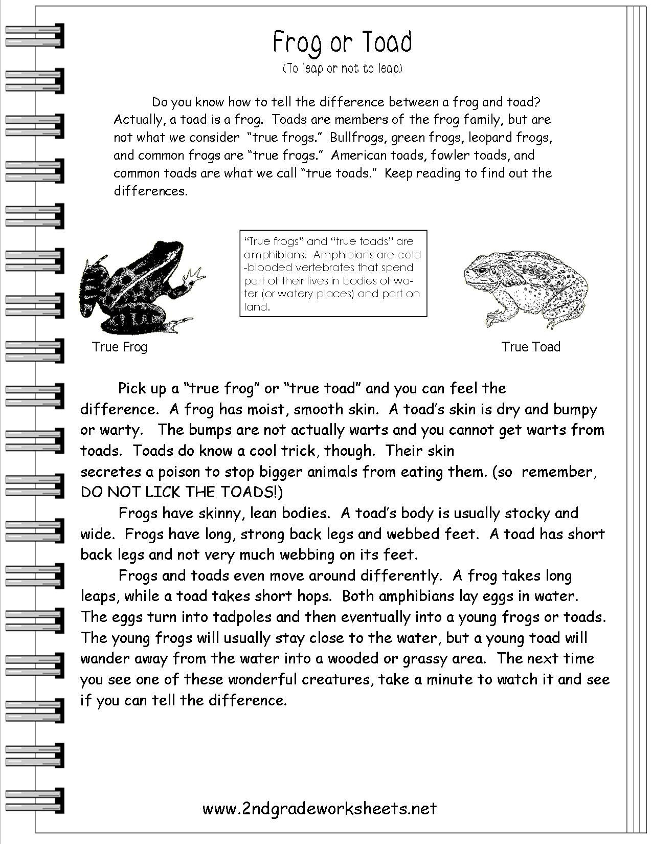 Frog Or Toad Worksheet