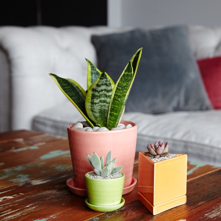 This insanely low maintenance plant not only claims a top for Low maintenance air purifying plants